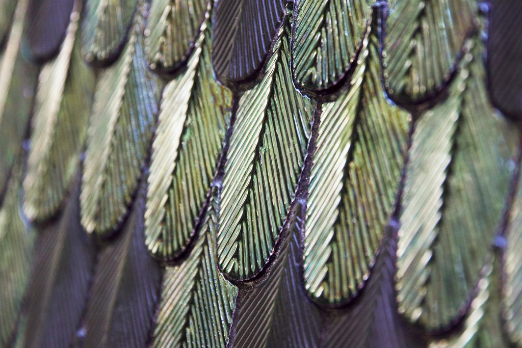 botteganove plumage artisan tiles hand crafted in Italy found in ajami surfaces in miami